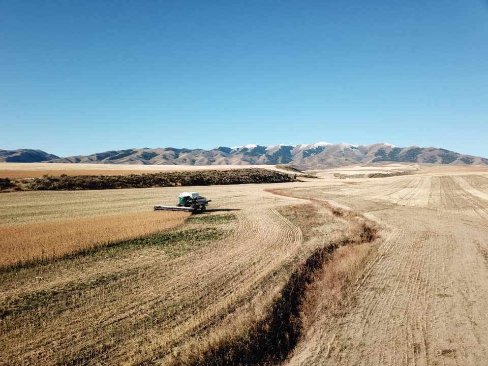 tractor in wheat field at the Campbell family farm in Juniper, Idaho